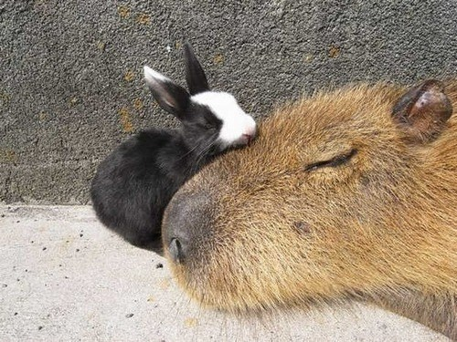 capybara,bunny,hug