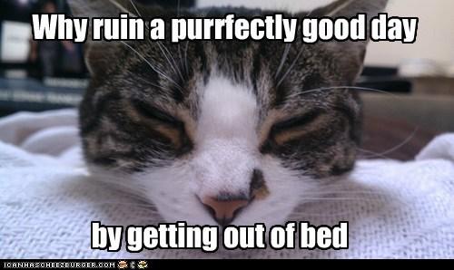 bed sleep - 7348693248