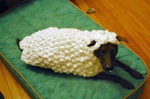 dogs animal costumes sheep - 7348738560