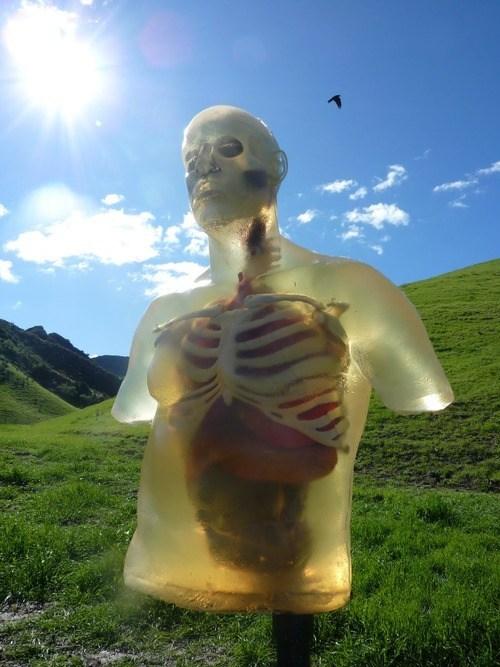 wtf bodies sunny - 7348759552