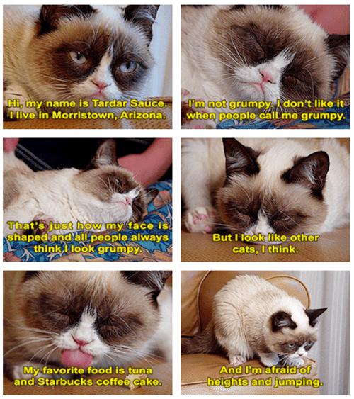 Grumpy Cat tardar sauce - 7348872704