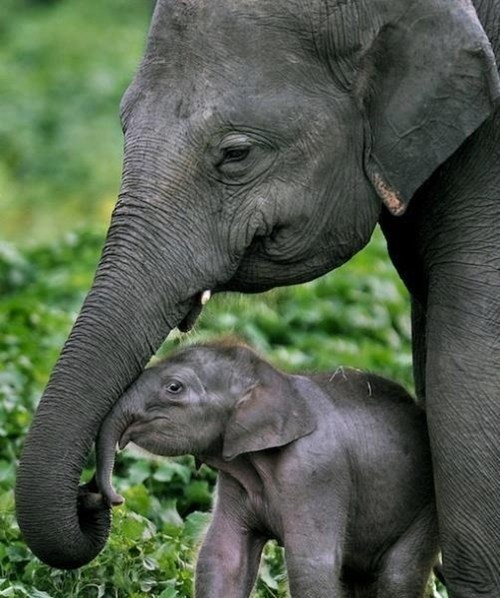 a baby elephant and his mom daily squee cute animals cute baby