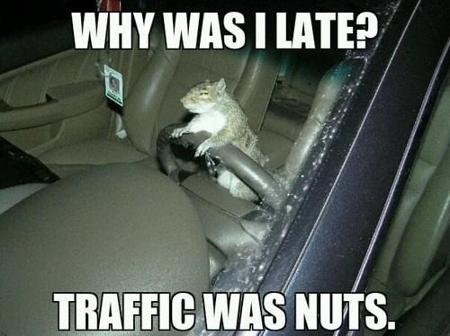 puns,nuts,traffic