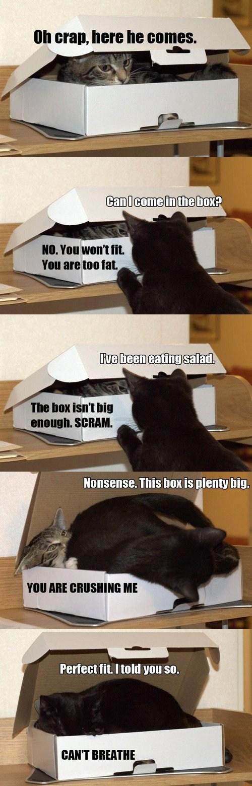 box,comic