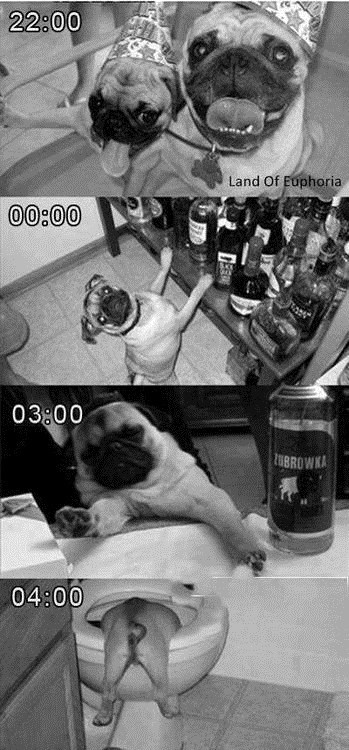 dogs booze Party mistake - 7349200384
