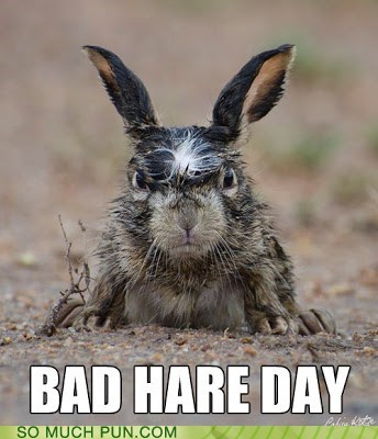 hair hare angry bunny