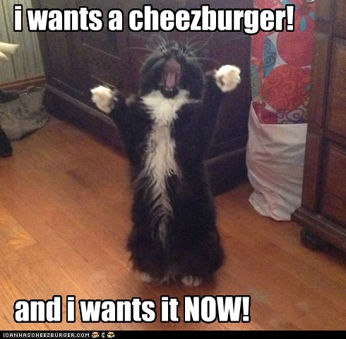 i wants a cheezburger! and i wants it NOW!