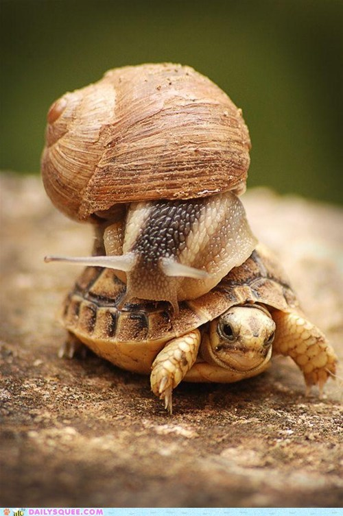 slow turtle snail - 7349575936