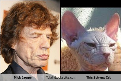 mick jagger,totally looks like,Sphynx cat