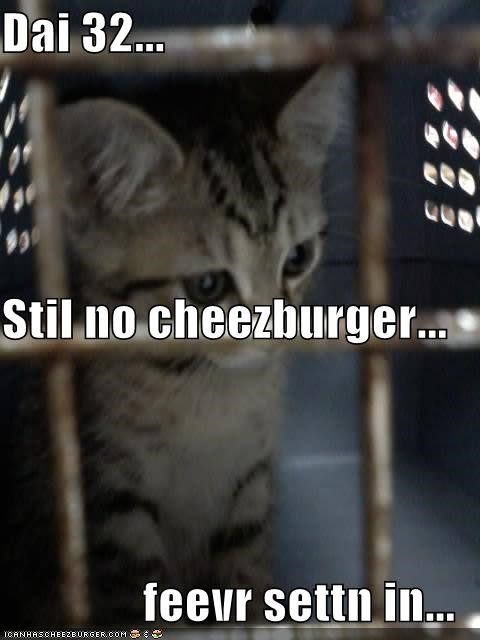Cheezburger Image 734990592