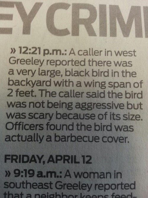 news birds weird newspaper fail nation g rated - 7350331136