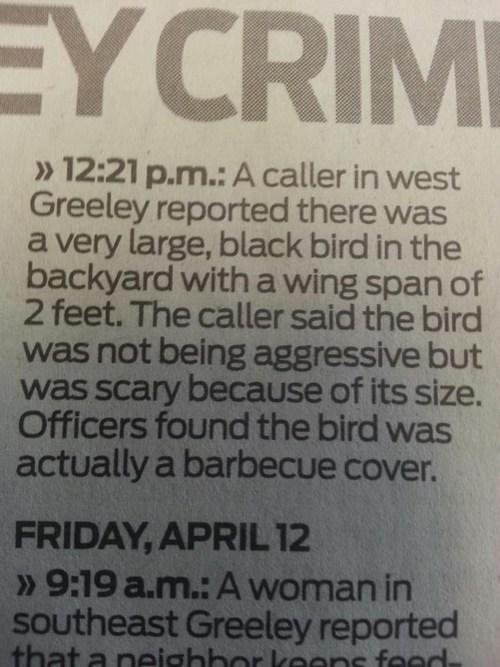 news birds weird newspaper fail nation g rated - 7350331136