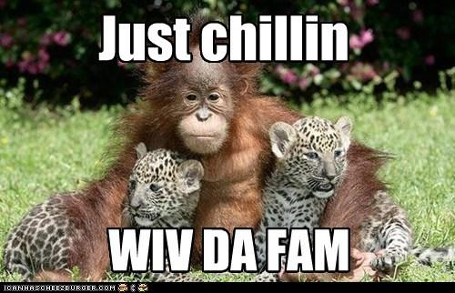 orangutan,family