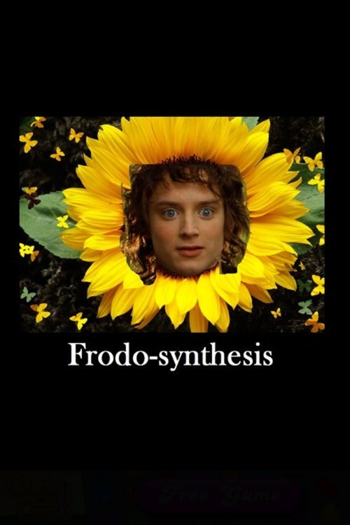 frodo,photosynthesis,Flower