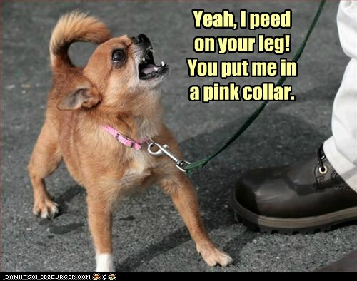 Yeah, I peed on your leg! You put me in a pink collar.