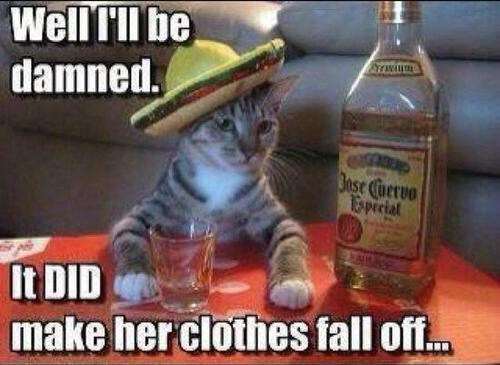 cat,booze,tequila,after 12,g rated