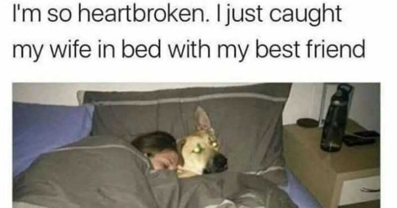 stupid but correct jokes like catching your wife cuddling with your dog