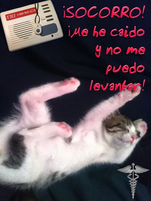 en español - 7354830592