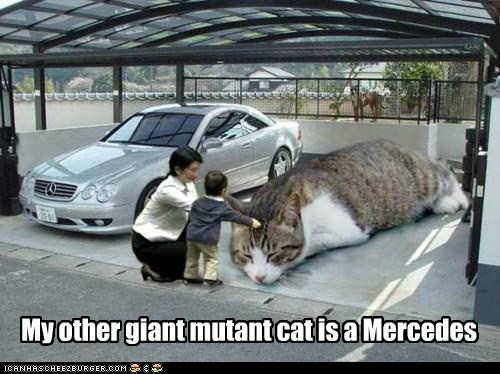 My other giant mutant cat is a Mercedes