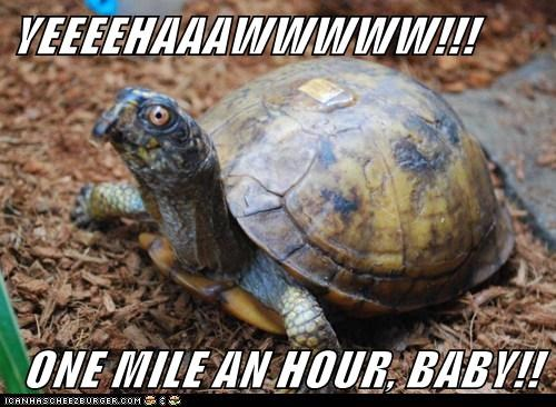 YEEEEHAAAWWWWW!!! ONE MILE AN HOUR, BABY!!
