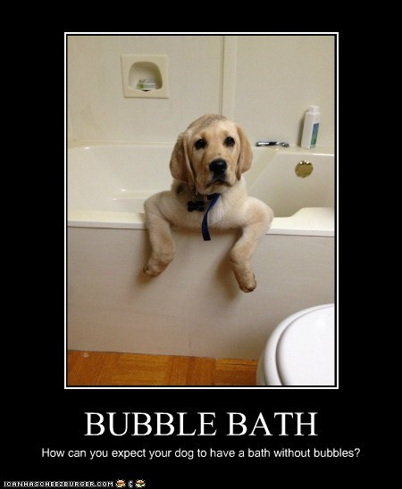 BUBBLE BATH How can you expect your dog to have a bath without bubbles?