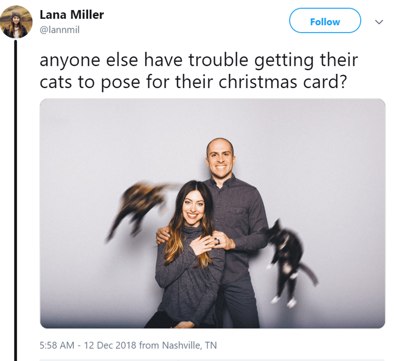 funny tweet about posing with cats for Christmas cards