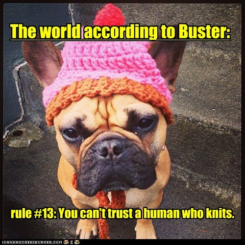 The world according to Buster: rule #13: You can't trust a human who knits.