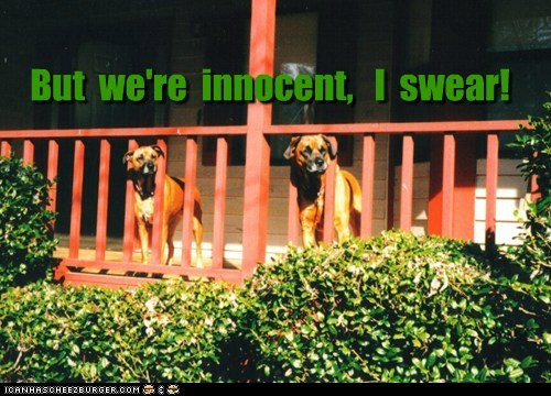 But we're innocent, I swear!