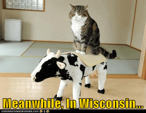 cow dairy wisconsin - 7360304896