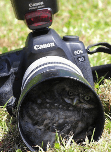 camera animals - 7360323584