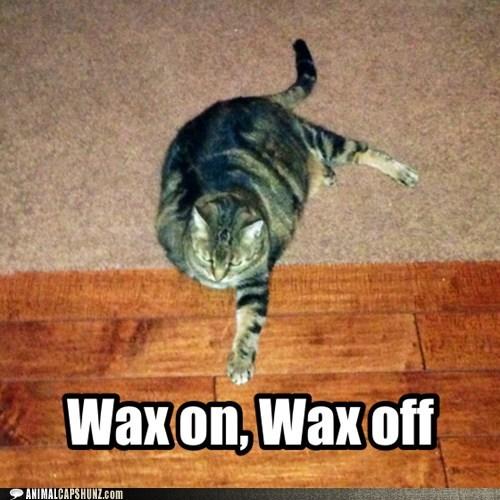 cat,the karate kid,wax on wax off