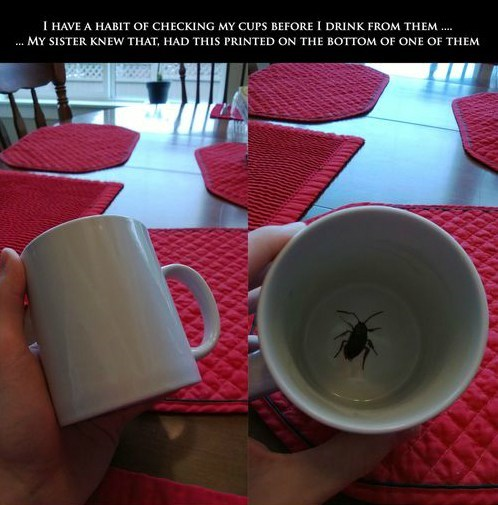coffee mug cockroach - 7360832256
