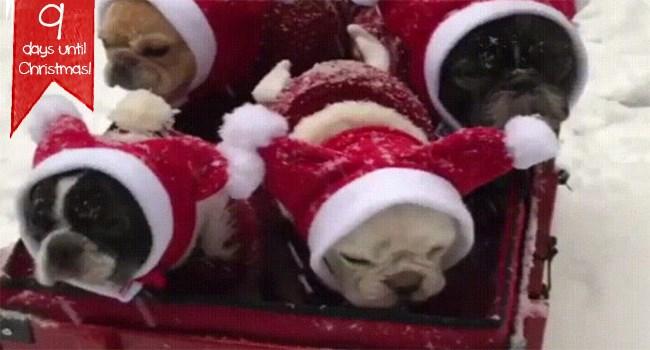 christmas gifs puppies kitten Cats animals Xmas - 7363333