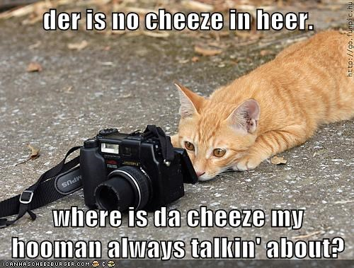 Cheezburger Image 7363500544