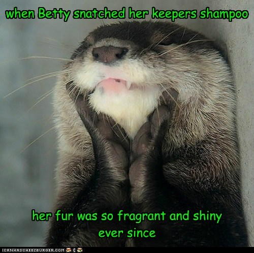 when Betty snatched her keepers shampoo her fur was so fragrant and shiny ever since