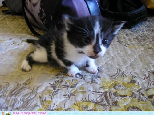 kitty acorn - 7364342016
