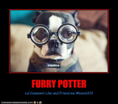 FURRY POTTER Lol Comment Like and Friend me #beno1212