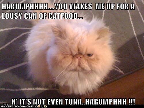 HARUMPHHHH....YOU WAKES ME UP FOR A LOUSY CAN OF CATFOOD... .... N' IT'S NOT EVEN TUNA..HARUMPHHH !!!