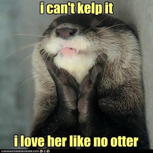 otter,love