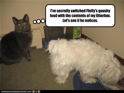 I've secretly switched Fluffy's gooshy food with the contents of my litterbox. Let's see if he notices.