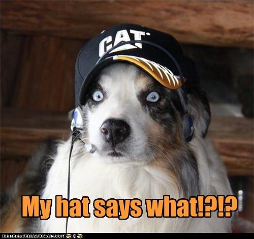 cat hat - 7365413376
