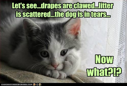 Let's see...drapes are clawed...litter is scattered...the dog is in tears... Now what?!?
