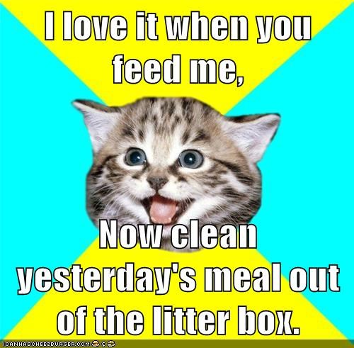 I love it when you feed me,  Now clean yesterday's meal out of the litter box.