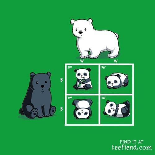Genetics bear panda - 7366777344