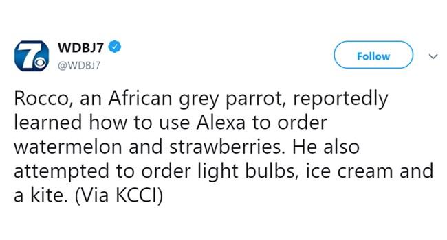 sweary amazon Alexa items parrot - 7369477