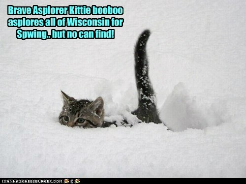 Brave Asplorer Kittie booboo asplores all of Wisconsin for Spwing.. but no can find!