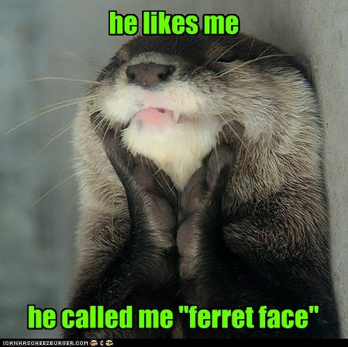 otter squee - 7369860352