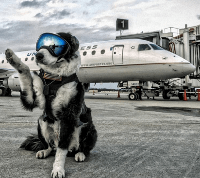 dogs job airport piper - 737029
