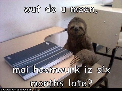 homework sloth - 7370674432