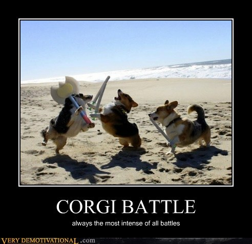 CORGI BATTLE always the most intense of all battles